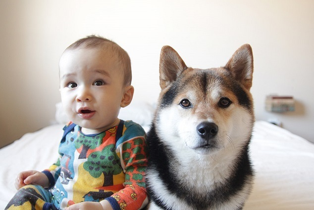 座っている赤ちゃんと犬,
