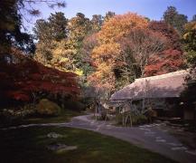 徳川ミュージアム分館 西山荘,茨城,紅葉,スポット