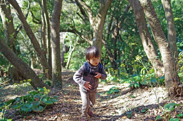 森の中を歩く男の子,科学館,宮城県,