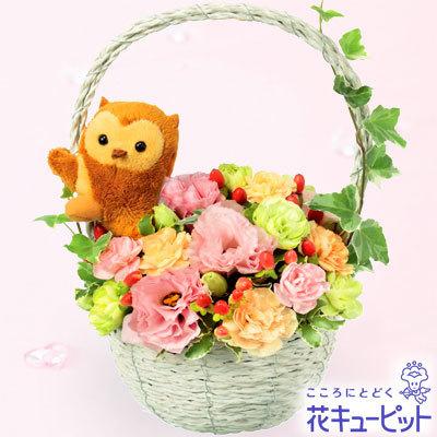 ふくろうのマスコット付きアレンジメント|花キューピッド,出産祝い,花,