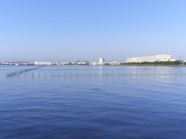 満潮,ふなばし三番瀬海浜公園,