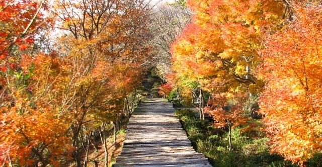 伊豆の国パノラマパーク 空中公園,静岡,紅葉,スポット