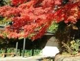 ヤマハリゾートつま恋の紅葉,静岡,紅葉,スポット