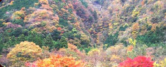 梅ヶ島コンヤ温泉の紅葉,静岡,紅葉,スポット