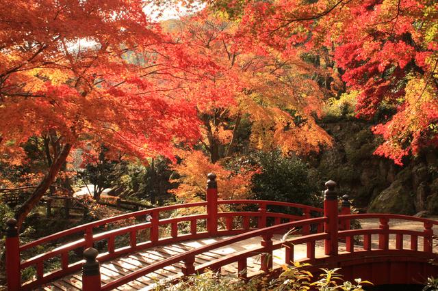 熱海公園,静岡,紅葉,スポット