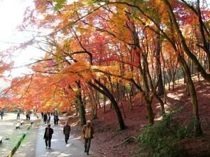 修善寺自然公園,静岡,紅葉,スポット