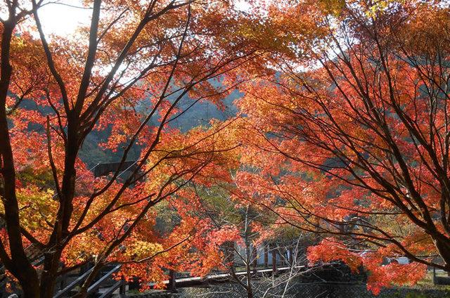 滝ノ谷不動峡の紅葉まつり,静岡,紅葉,スポット