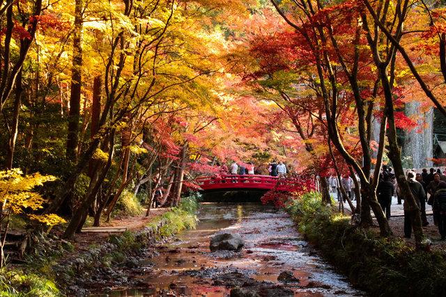 小國神社,静岡,紅葉,スポット