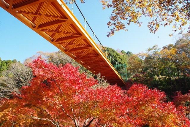 泉自然公園,千葉,紅葉,スポット