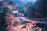 沢山不動滝 と かじか橋,千葉,紅葉,スポット