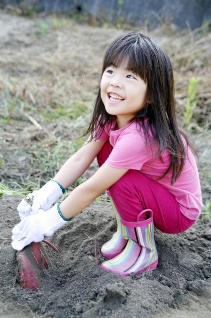 さつまいも掘りをする女の子,荒幡農園,
