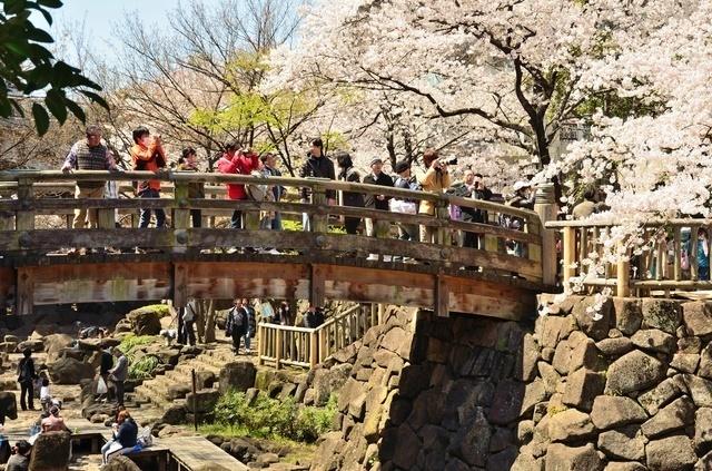 音無親水公園 ピクスタ,公園,水遊び,東京