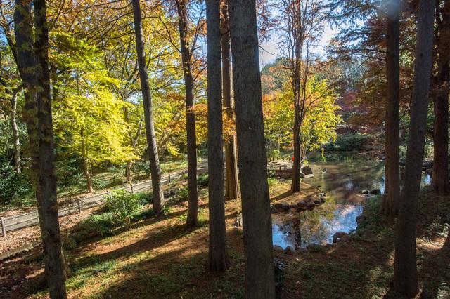 林試の森公園 ピクスタ,公園,水遊び,東京