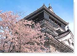 勝山公園(小倉城)の桜,福岡,お花見,ランキング