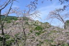 油山市民の森の花木園,福岡,お花見,ランキング