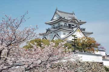 岸和田城,大阪,花見,名所