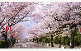 ,大阪,花見,名所