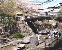音無旬萃香園の春の景色,音無親水公園,水遊び,