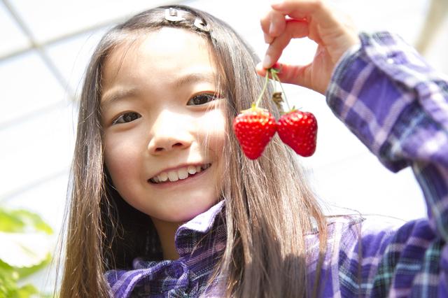 双子いちごを持つ女の子,秋,果物狩り,関東