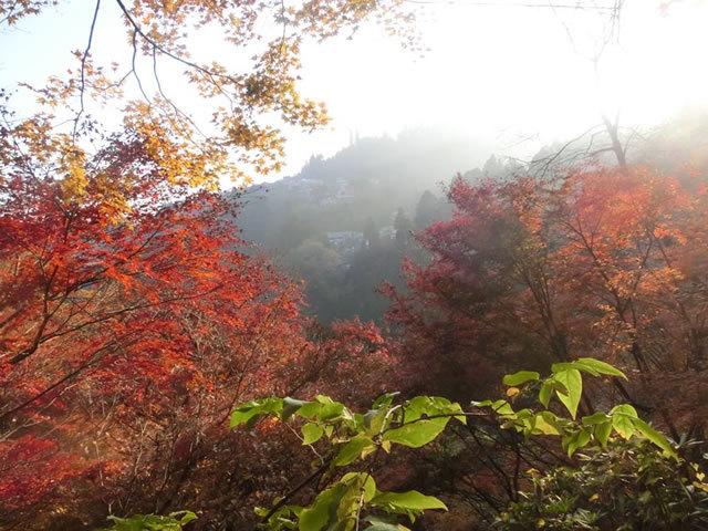 御岳山,関東,紅葉,スポット