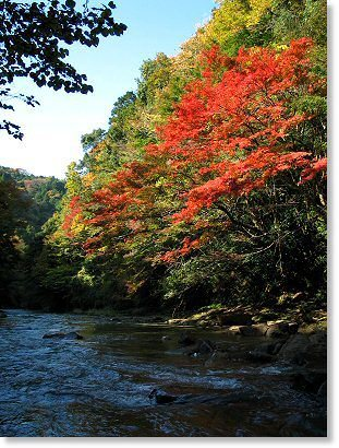 粟又の滝,関東,紅葉,スポット