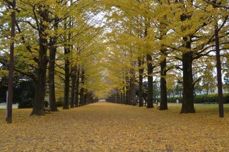 国営昭和記念公園,関東,紅葉,スポット