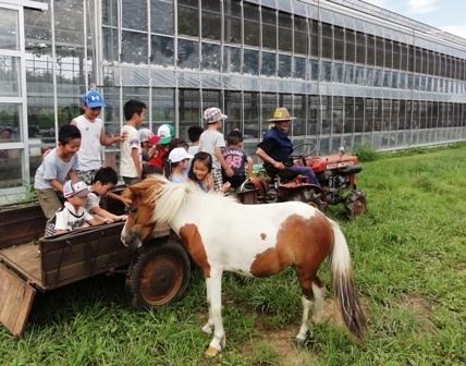 弁慶果樹園,神奈川,さつまいも掘り,子ども