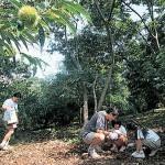 藤野園芸ランド,神奈川,さつまいも掘り,子ども