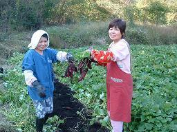 朝霧高原オートキャンプ場,静岡,子ども,さつまいも掘り