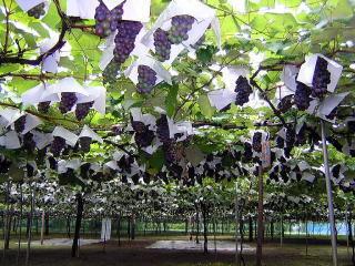加賀谷果樹園,東北,旅行,紅葉