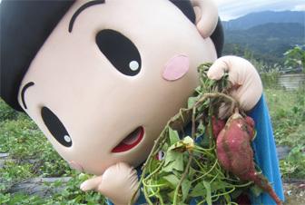 ,芋掘り,大阪,おすすめ