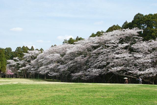 泉自然公園,千葉,ピクニック,公園