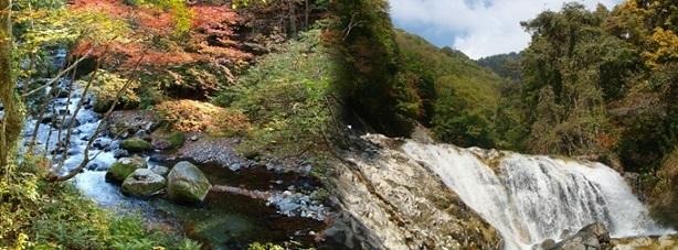 照葉峡散策ツアー,紅葉,バス,関東