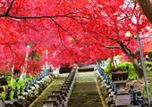 小田急トラベルバスツアー,紅葉,バス,関東