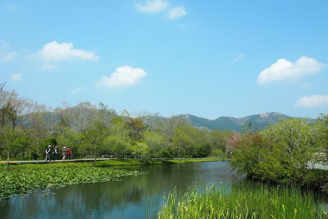 箱根町立箱根湿生花園,紅葉,関東,子ども