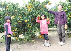 津久井浜観光農園,神奈川,みかん狩り,子ども