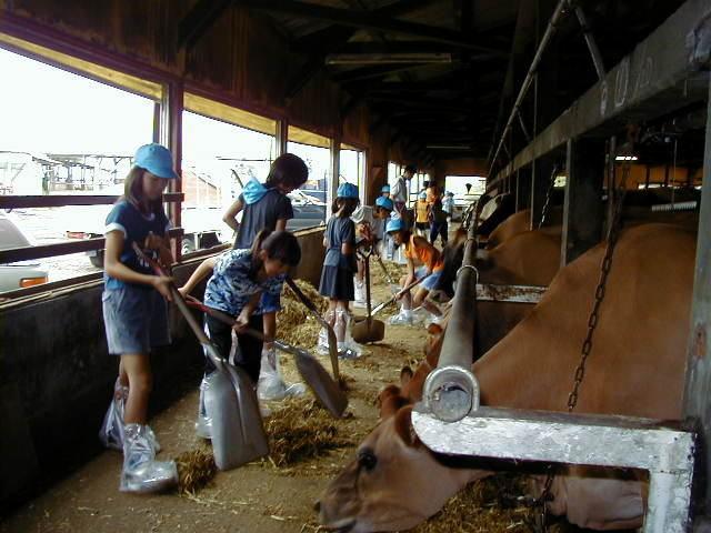 松下牧場酪農体験,静岡,牧場,体験