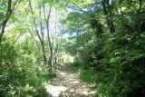 横浜自然観察の森,神奈川,ハイキング,コース