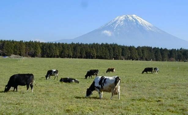 松下牧場,静岡,親子,農業
