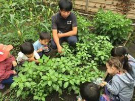 キッズ土育,都内,子ども,農業体験