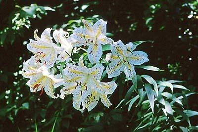 雪国植物園,新潟,植物園,おすすめ