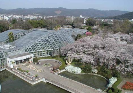 京都府立植物園,京都,子連れ,植物園