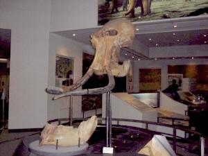 相模原市立博物館マンモスの化石,宇宙,神奈川県,プラネタリウム