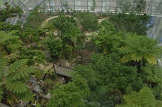 ぐんま昆虫の森 温室,昆虫,スポット,ぐんま昆虫の森