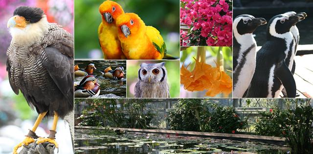 掛川花鳥園,新幹線,静岡,掛川