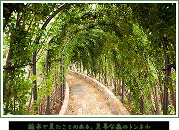 ぐらんぐりんガーデンの自然,武蔵小杉,グランツリー,屋上