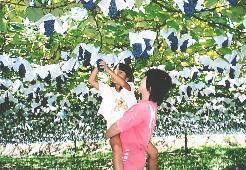 駒立ぶどう狩り 遊覧農場 ヤマナカ果園,フルーツ狩り,愛知県,スポット
