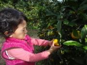 松本農園,秋,味覚狩り,神奈川