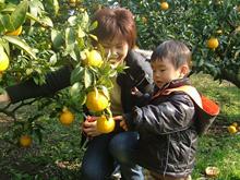 収穫体験農園 ふたつぼり,みかん狩り,静岡,おすすめ
