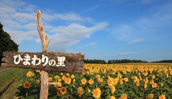 北竜町 ひまわりの里,北海道,おすすめ,ひまわり